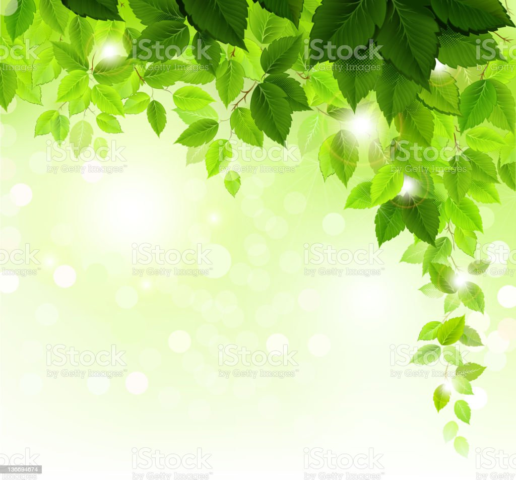 Summer branch with fresh green leaves vector art illustration