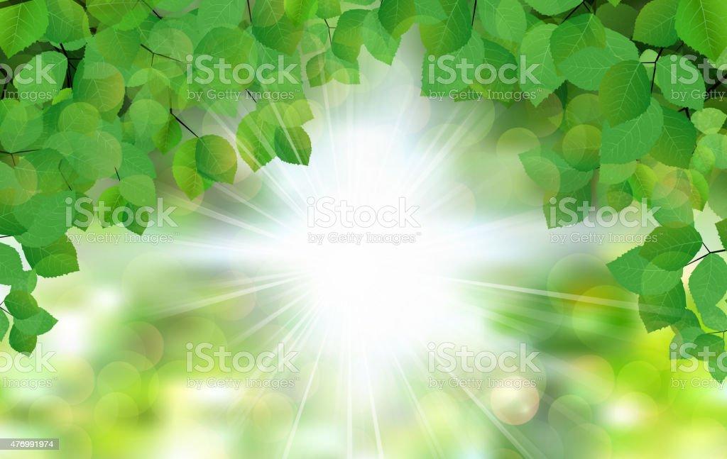 Summer fresh leaf green leaves with sun rays vector art illustration