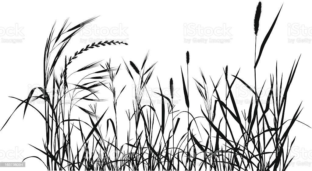 Summer Meadow vector art illustration