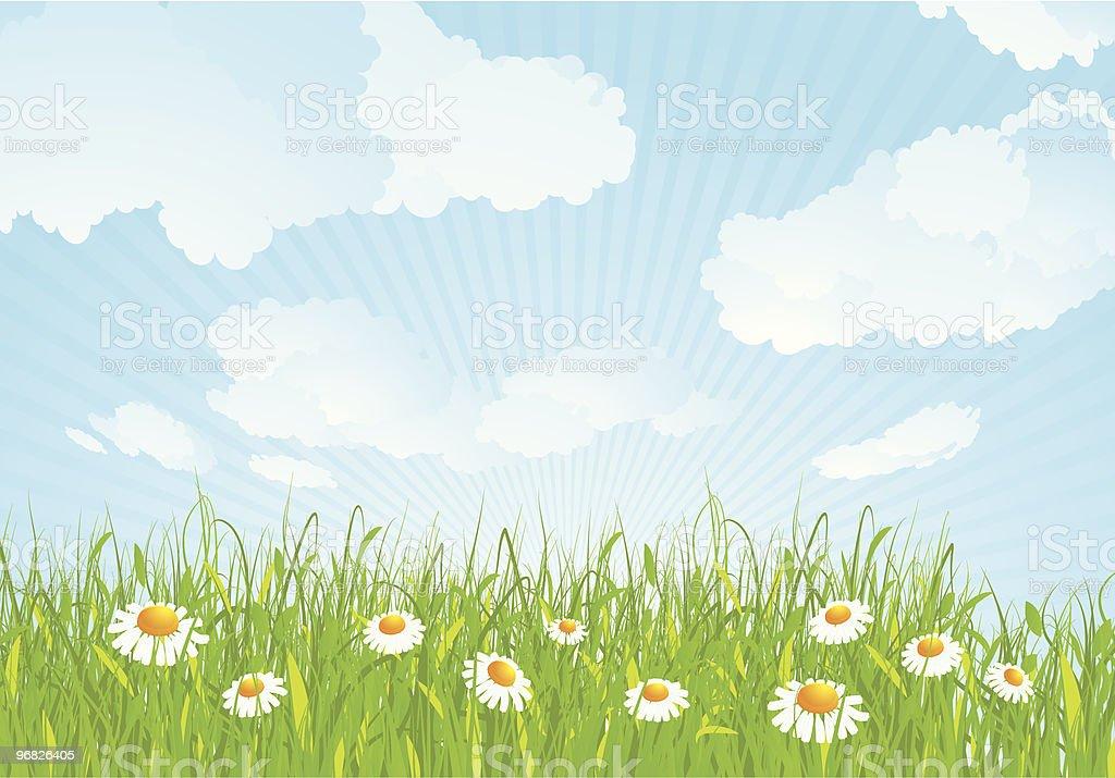 Summer meadow. royalty-free stock vector art