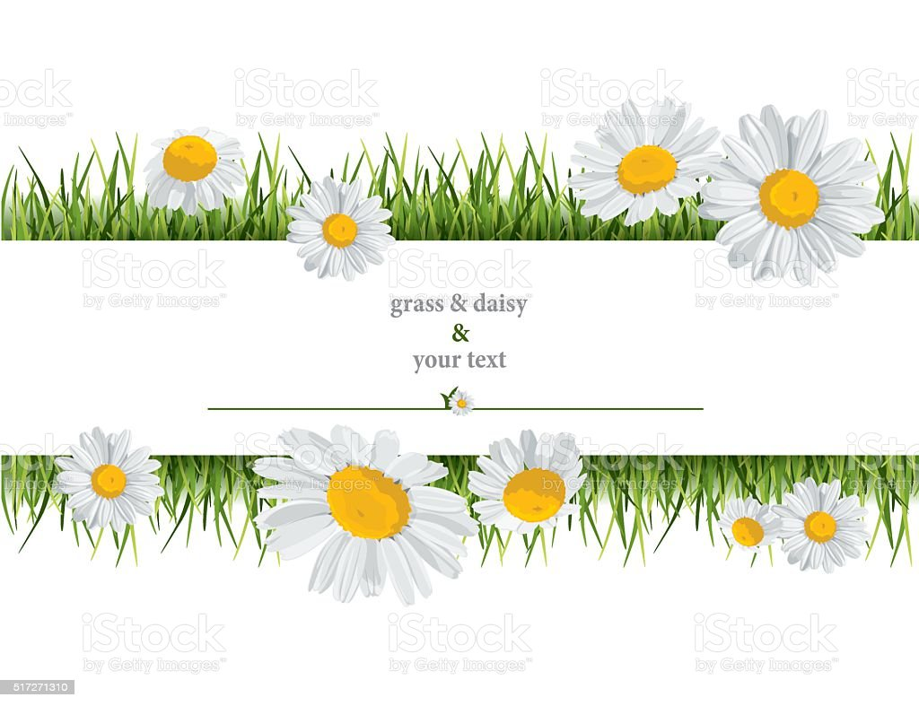 summer print with daisies vector art illustration