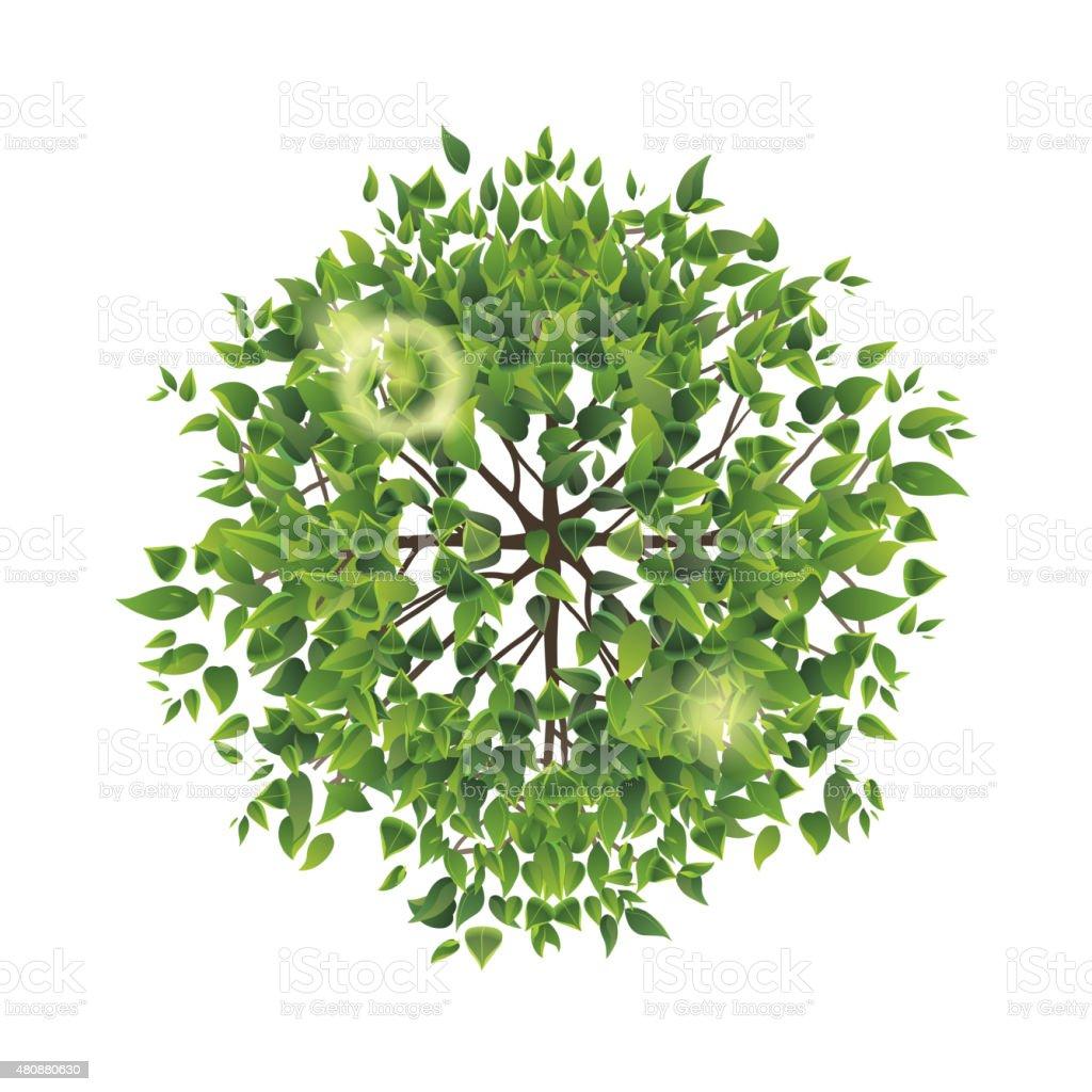 summer tree top view vector art illustration