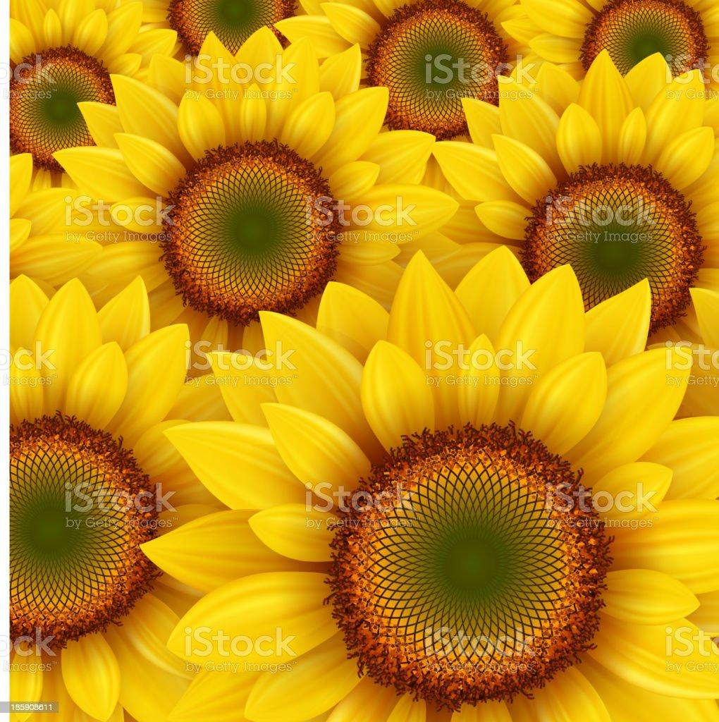 Sunflower background royalty-free stock vector art