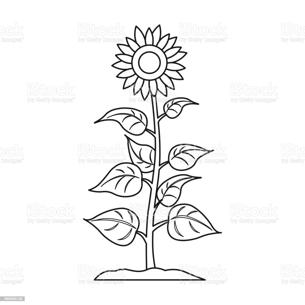 Sunflower Icon In Outline Style Isolated On White ...