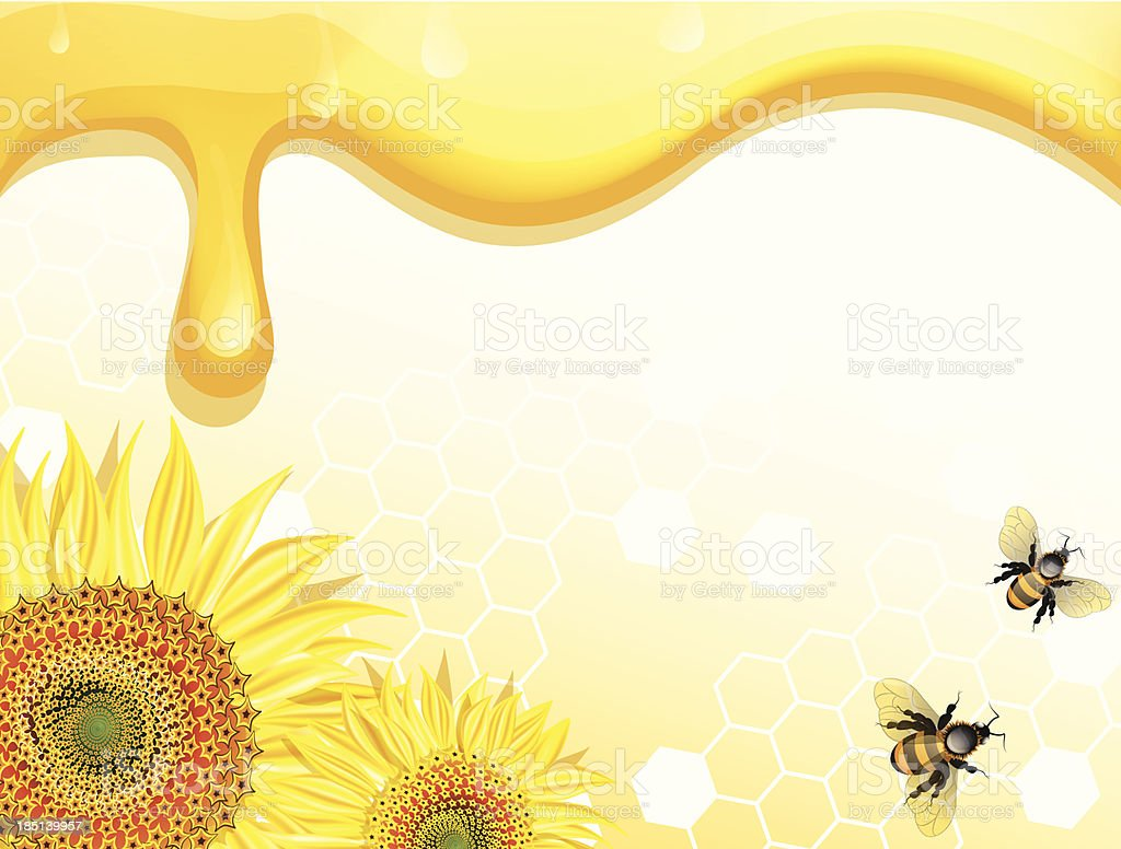 Sunflowers and bees on honey background royalty-free stock vector art