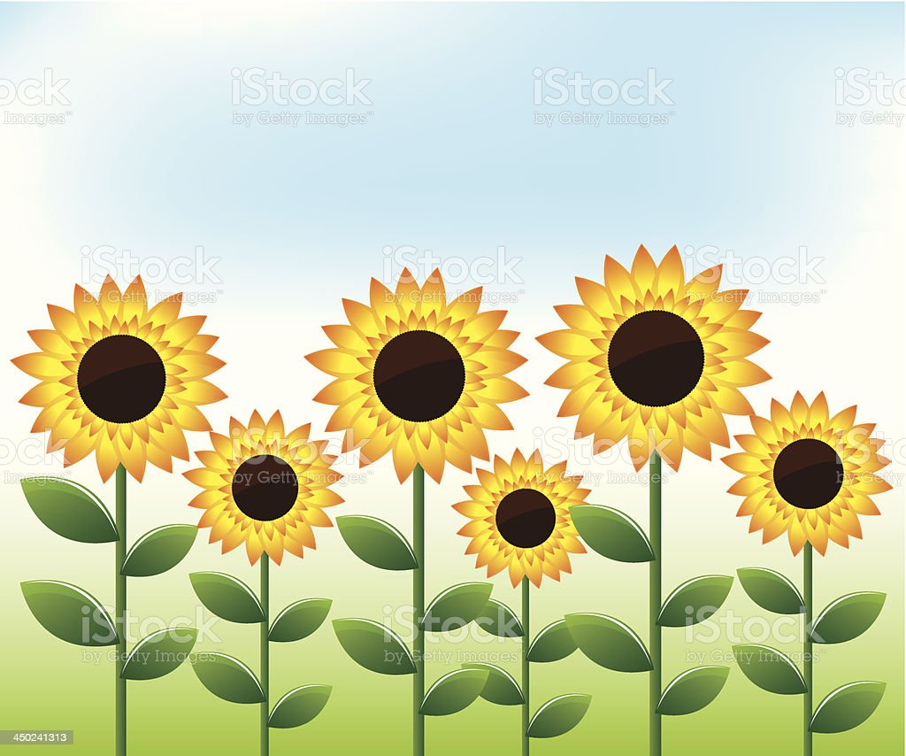 Sunflowers landscape background royalty-free stock vector art