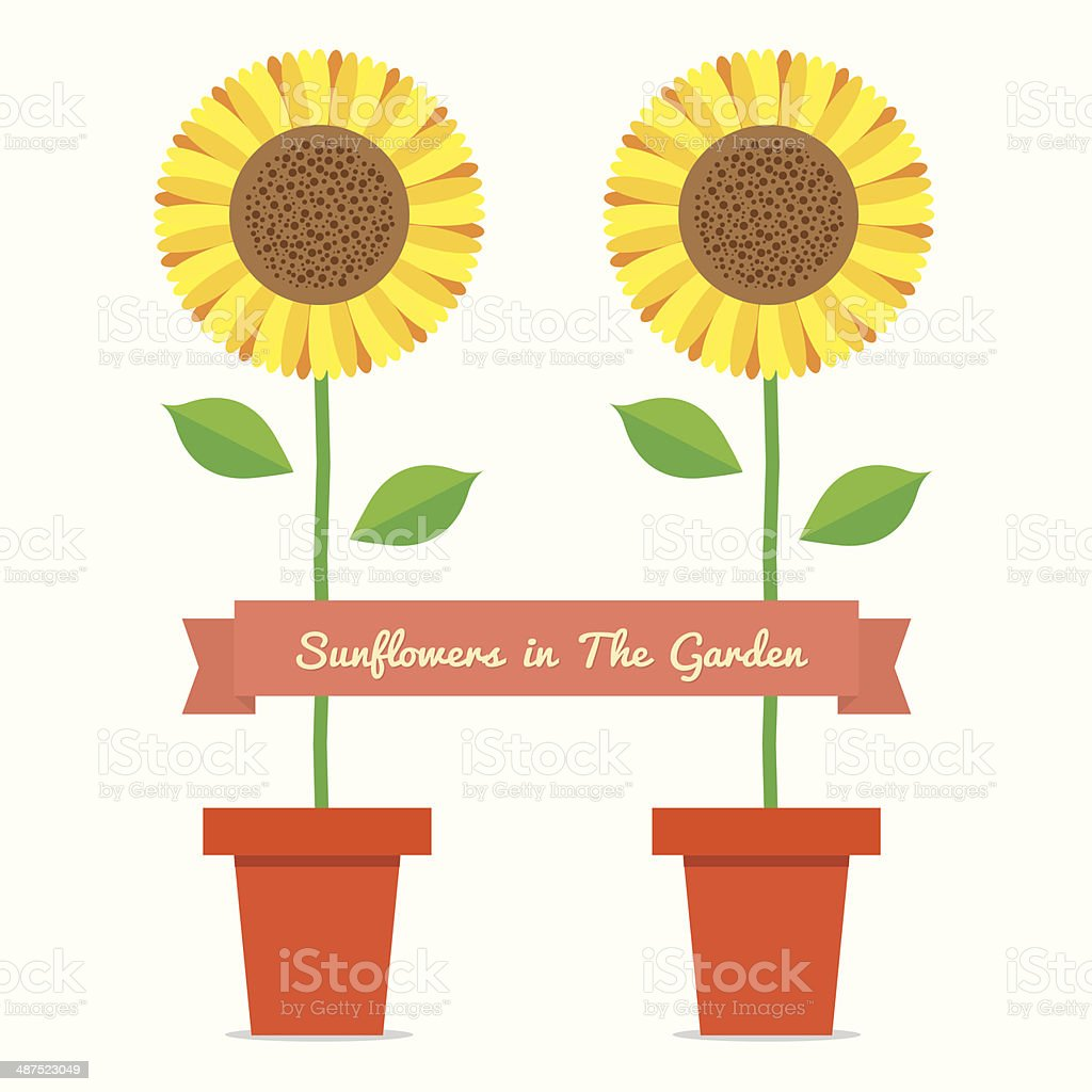 Sunflowers Pot Plant vector art illustration