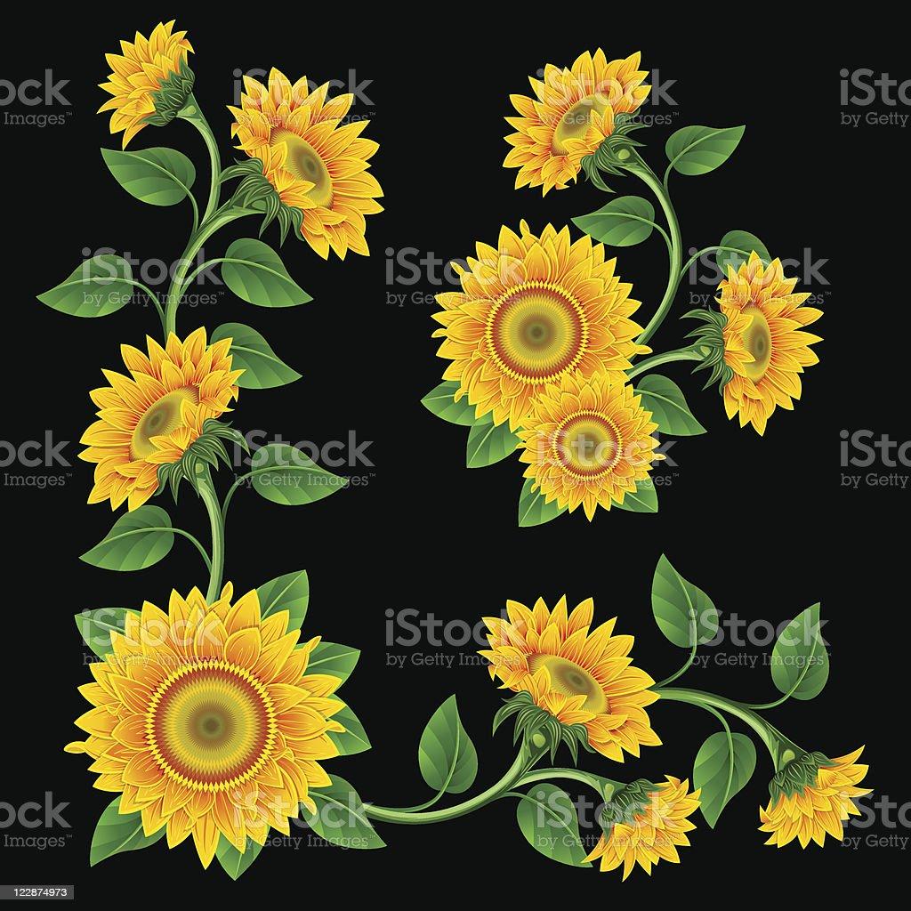 Sunflowers. vector art illustration