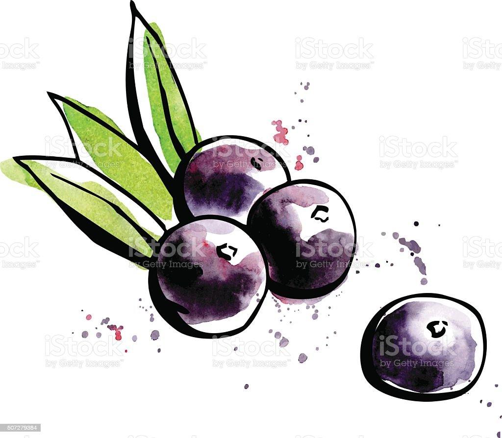 Superfood Acai berries vector art illustration