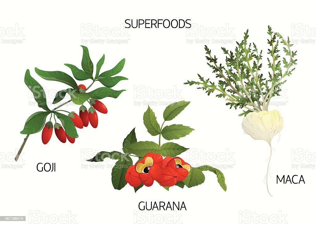 Superfoods set vector art illustration