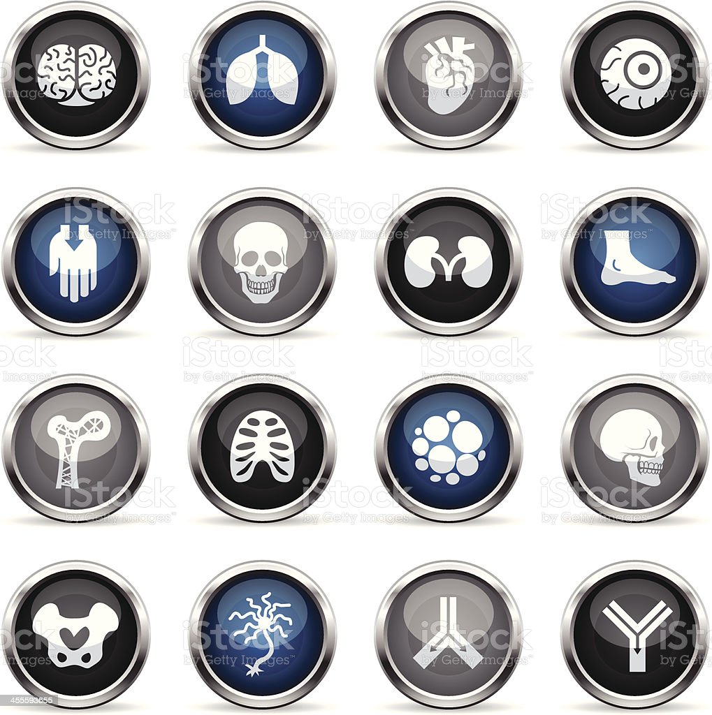 Supergloss Icons - Anatomy royalty-free stock vector art