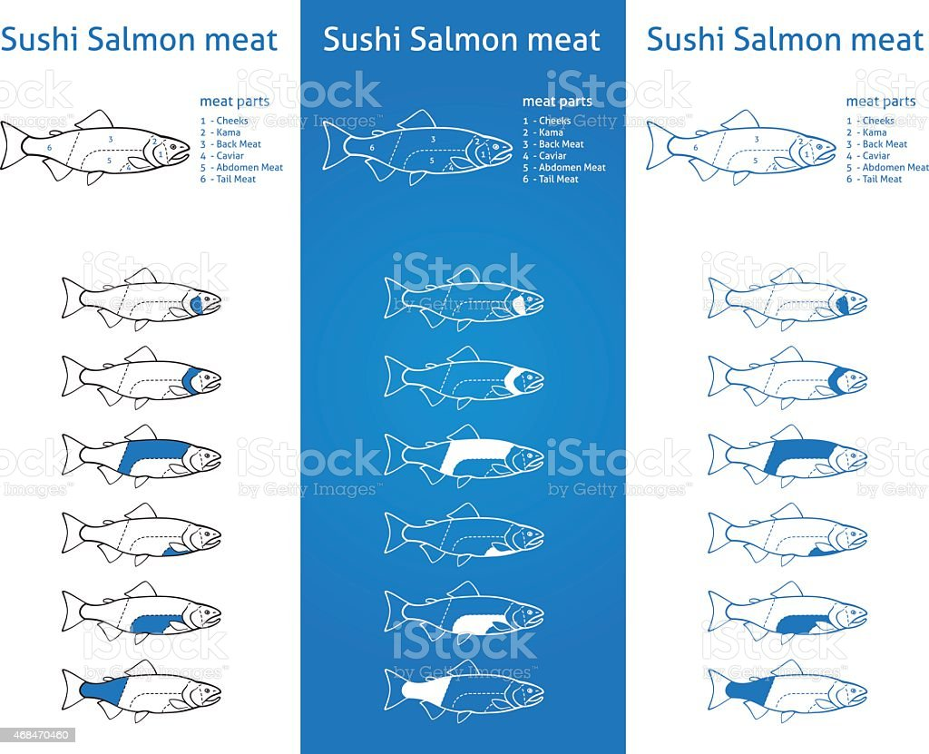 Sushi salmon meat diagram vector art illustration