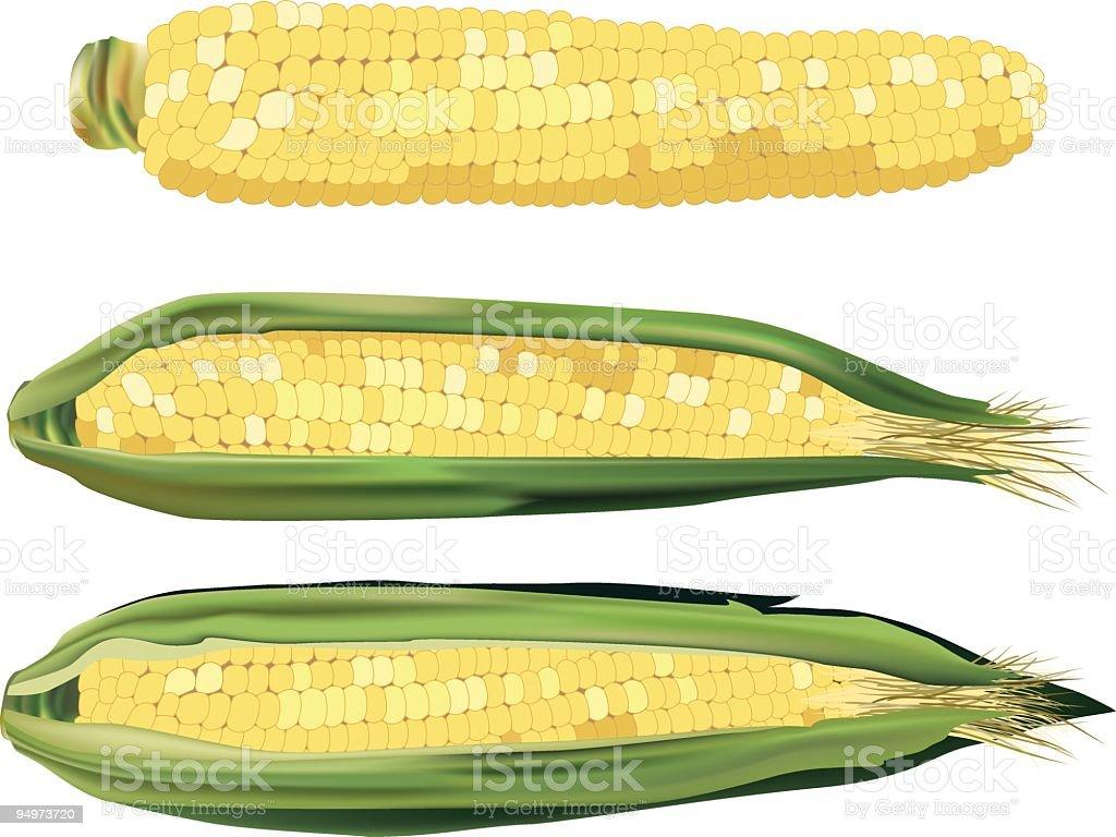 Sweet Corn vector art illustration