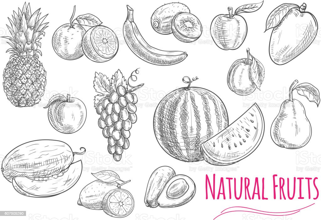 Sweet fresh fruits isolated sketches vector art illustration