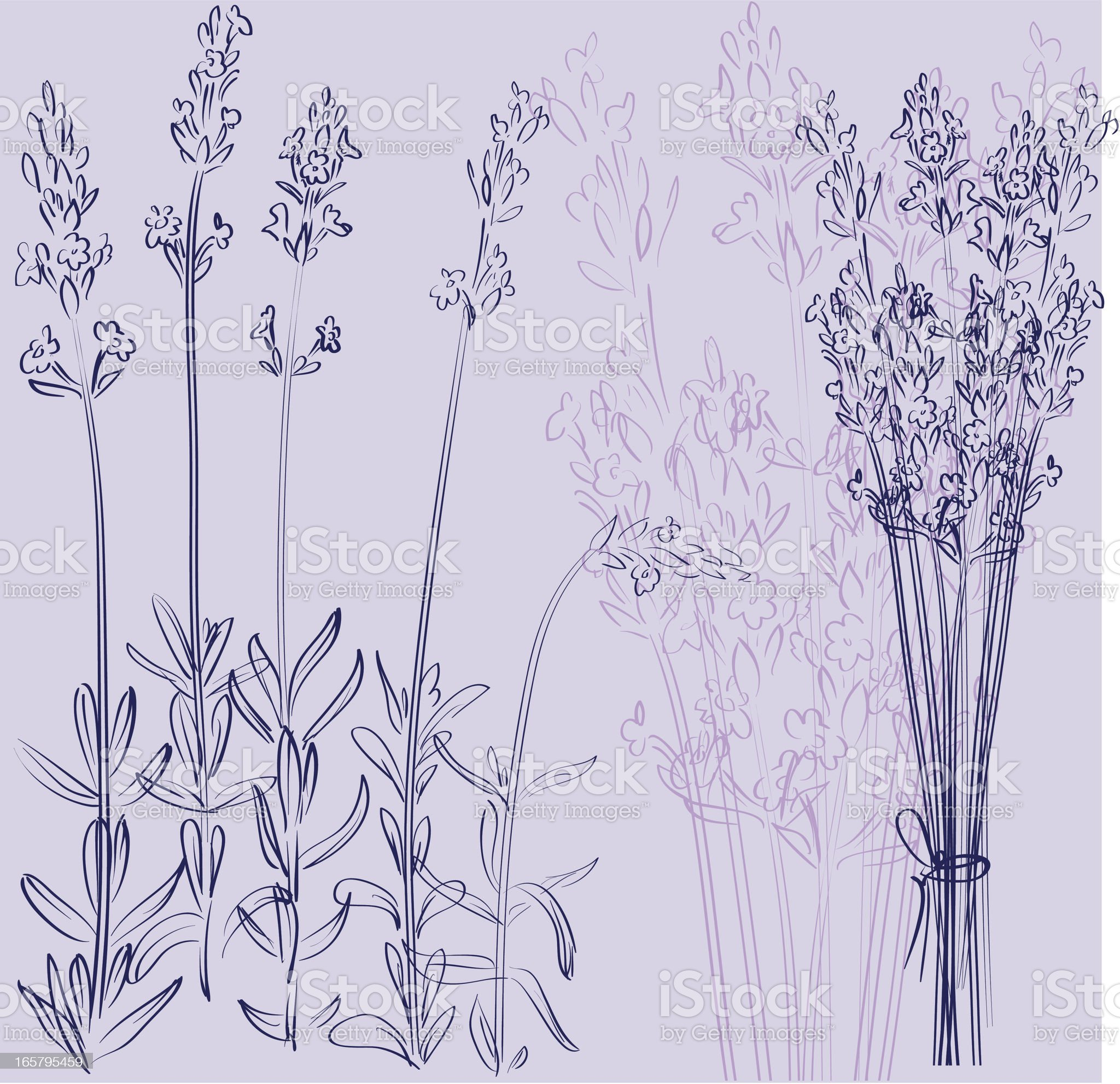 Sweet lavender royalty-free stock vector art