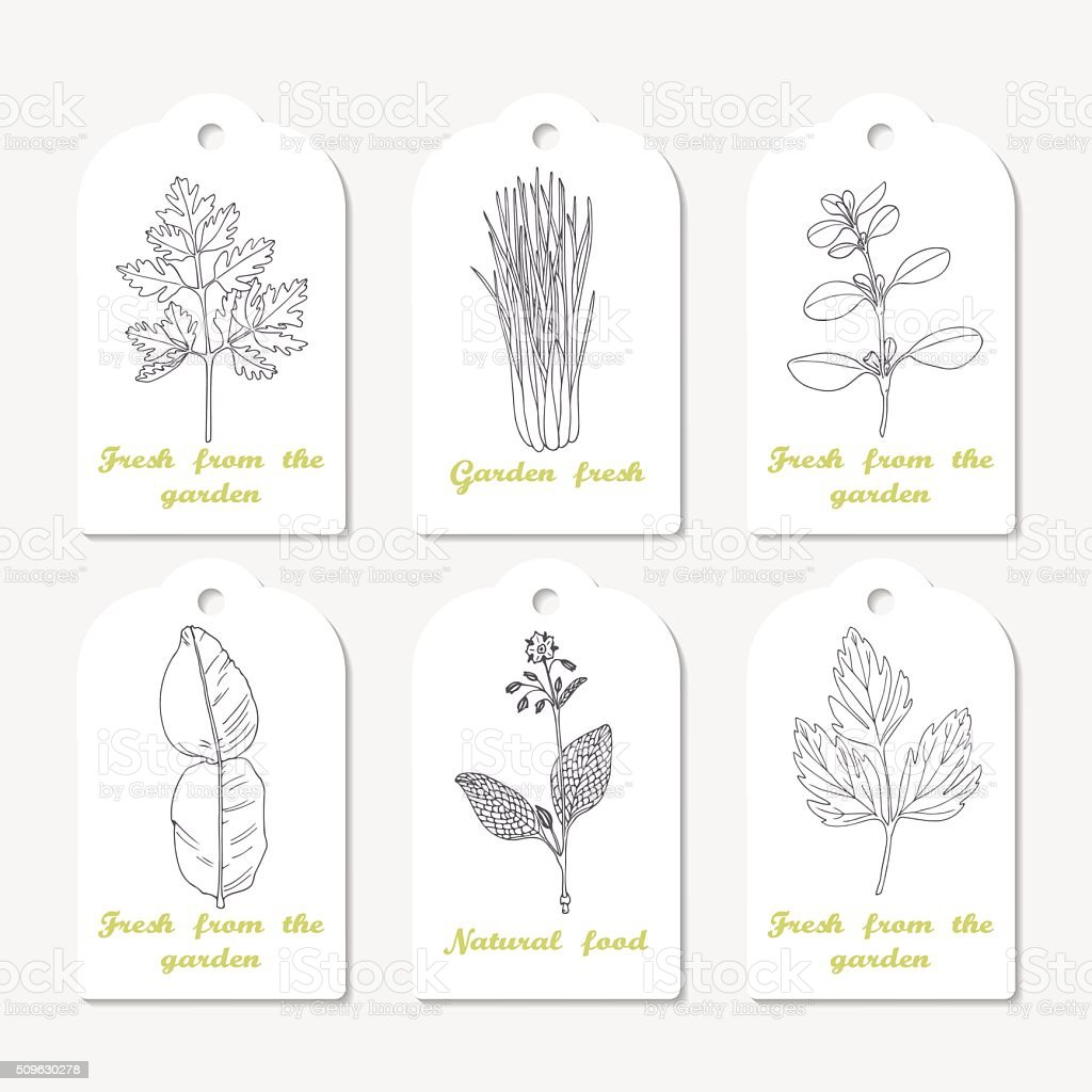 Tags collection with hand drawn spicy herbs. Sketched chervil, lovage vector art illustration