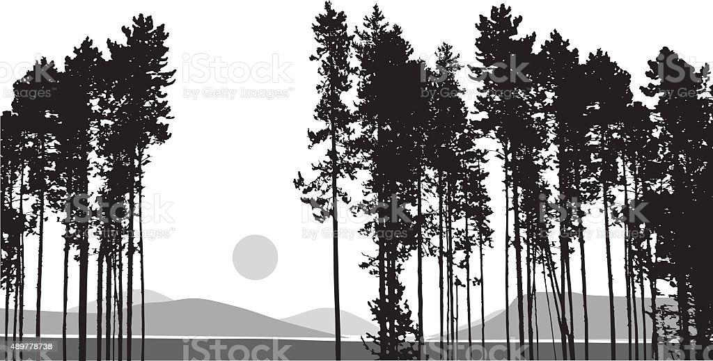Tall Pines And Hillsides vector art illustration