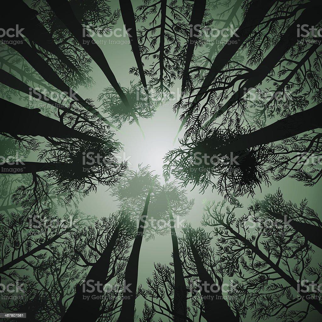 Tall Pines vector art illustration