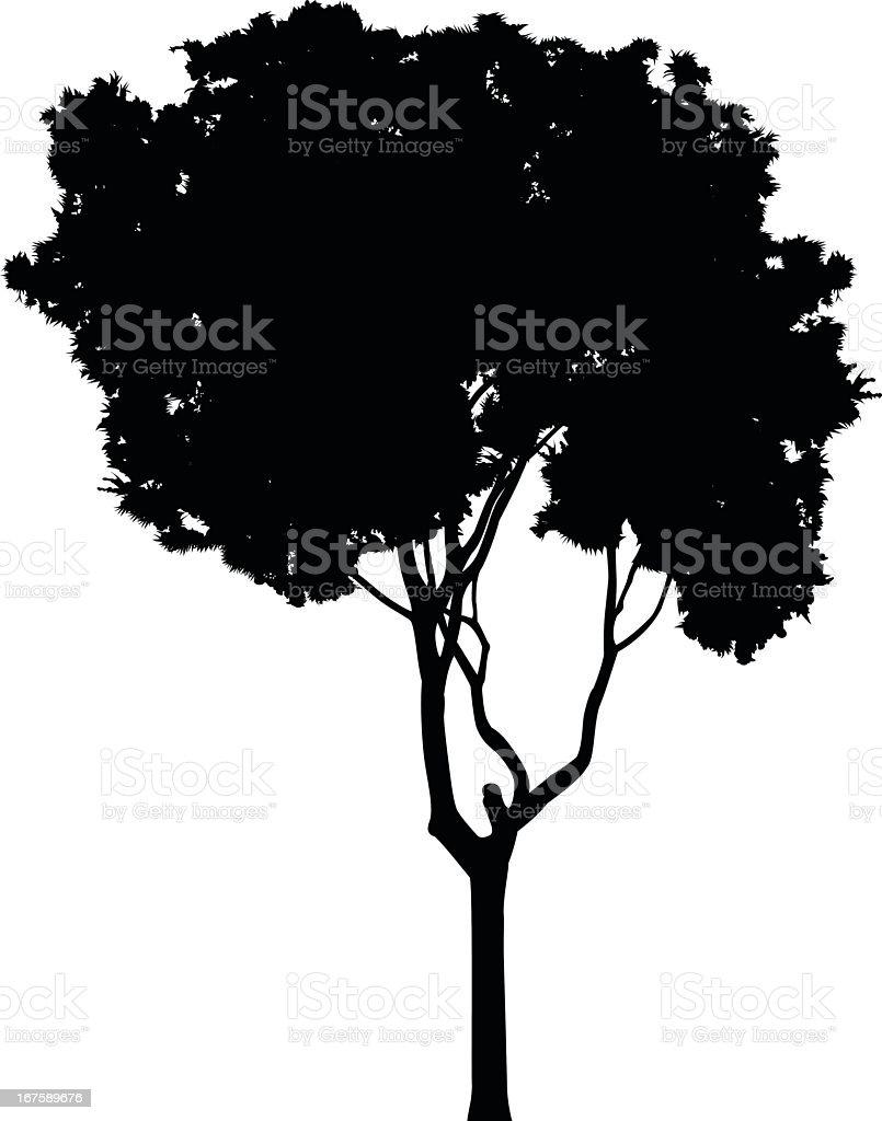 Tall Tree royalty-free stock vector art