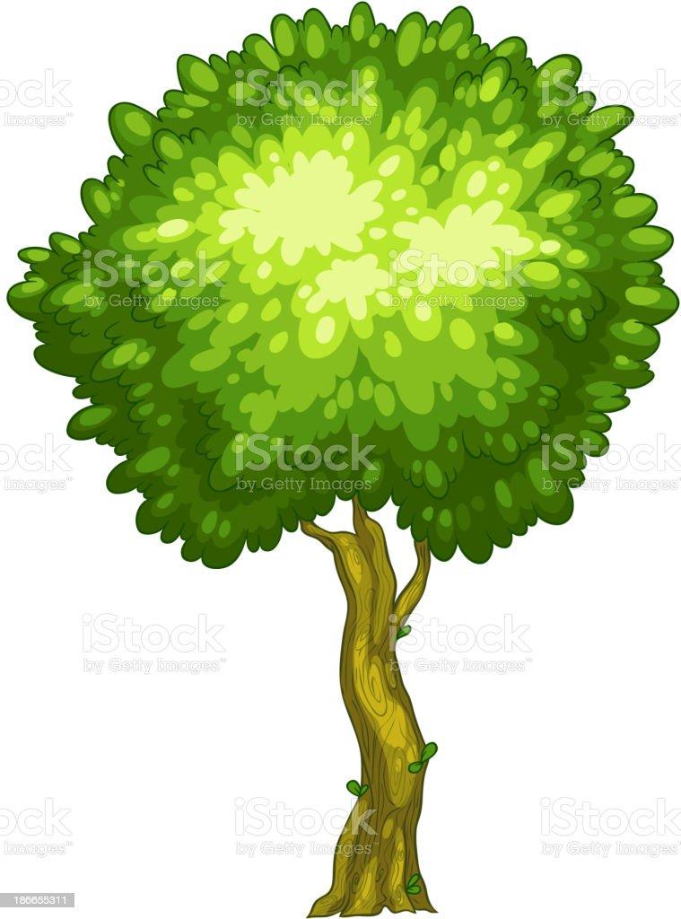 tall tree vector. tall tree royalty-free stock vector art