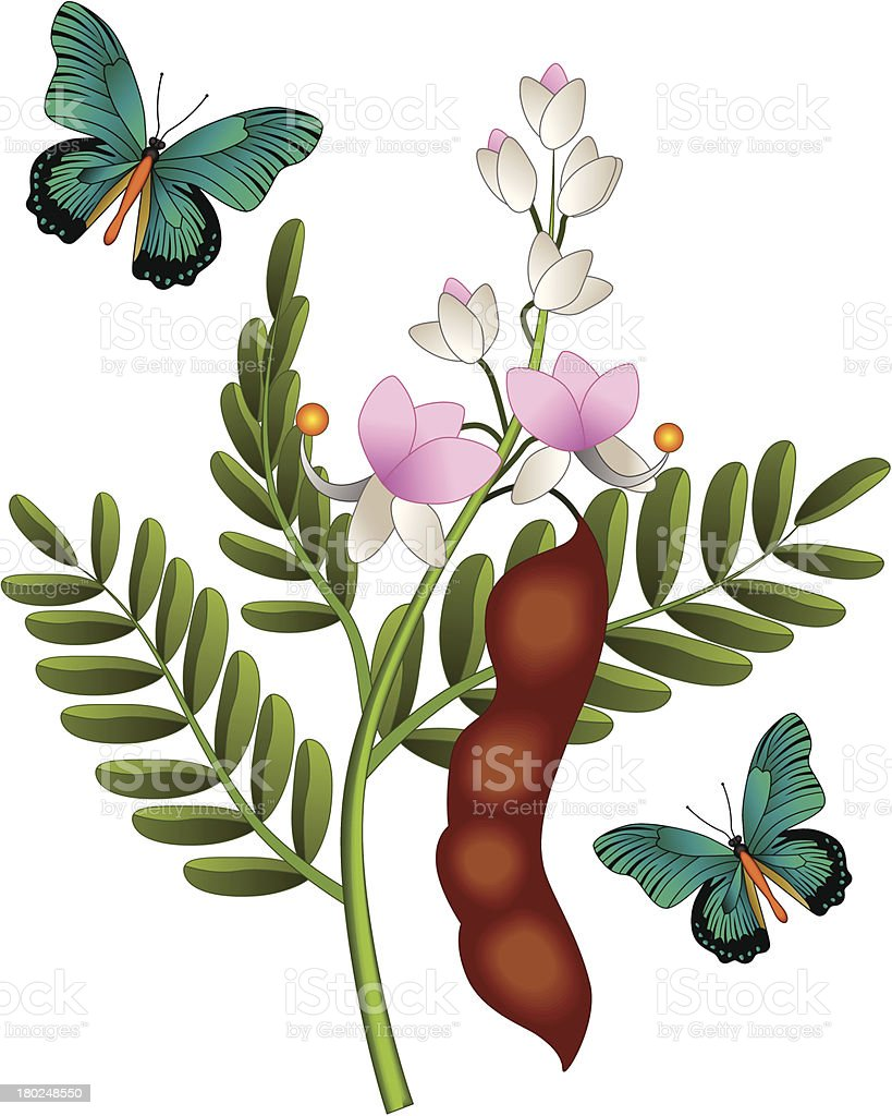 tamarind flower and butterfly vector art illustration