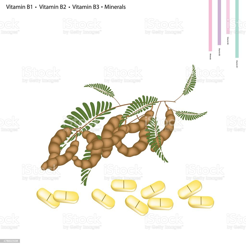 Tamarind Pods with Vitamin B1, B2, B3 and Minerals vector art illustration