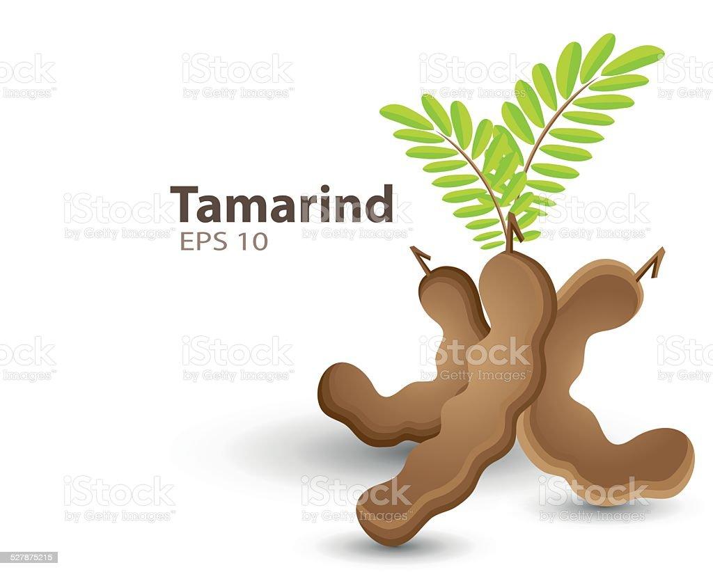 Tamarind vector art illustration