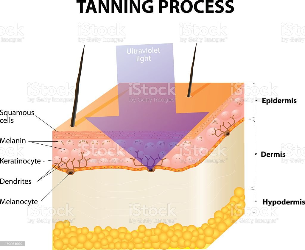 Tanning process vector art illustration