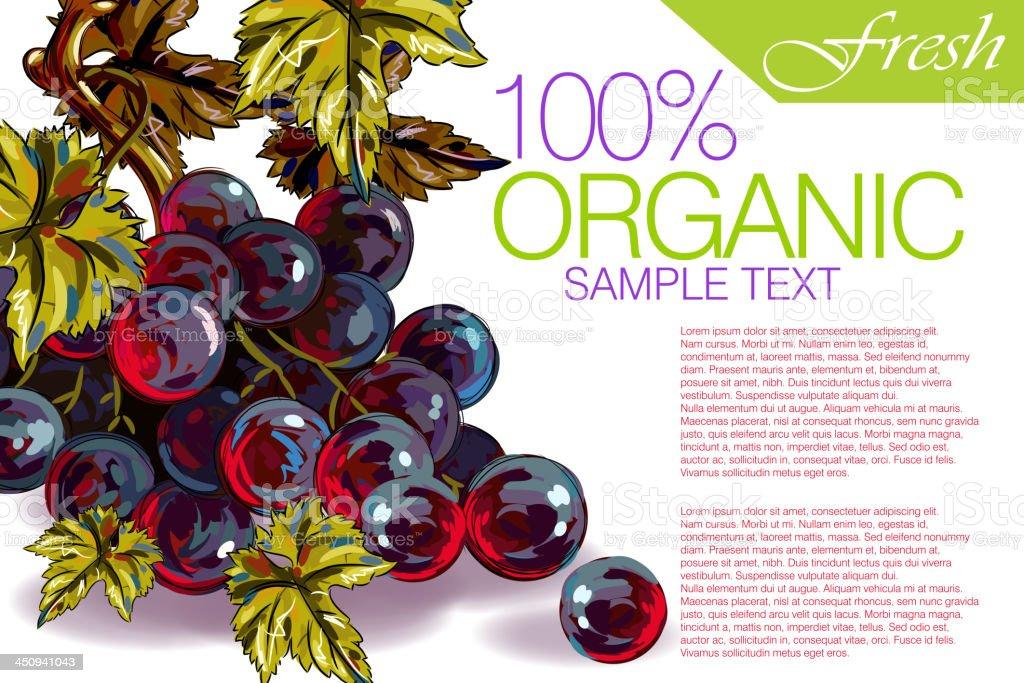 Tasty Grapes royalty-free stock vector art
