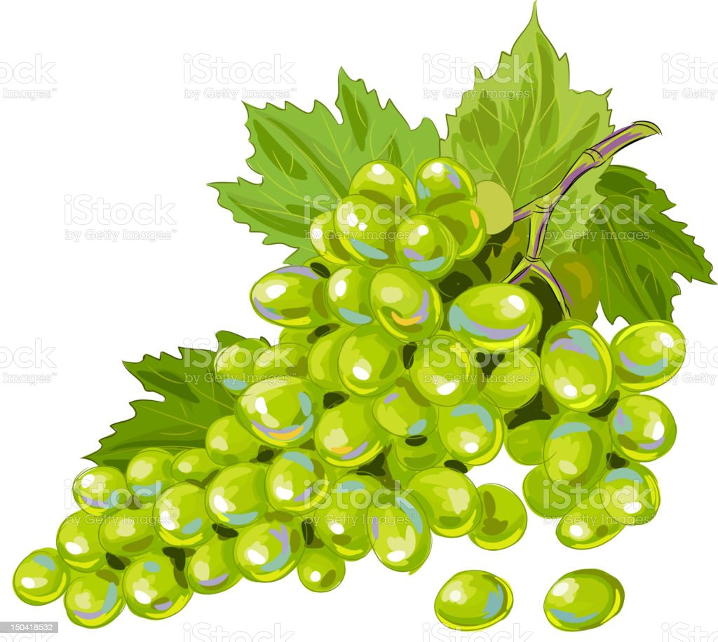 Tasty Green Grapes isolated on white vector art illustration