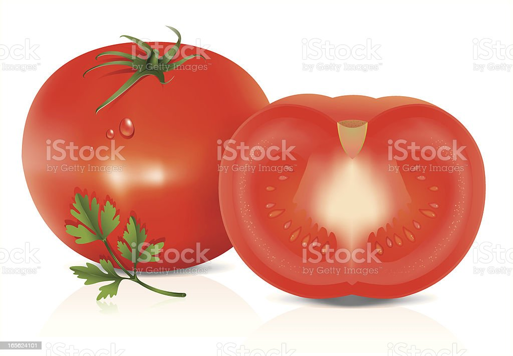 Tasty tomato with herb vector art illustration
