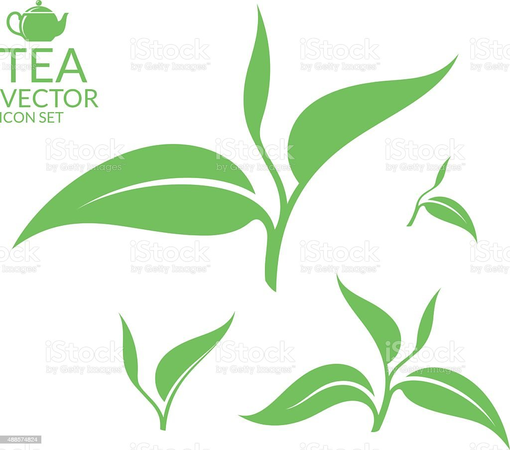 Tea. Isolated leaves on white background vector art illustration