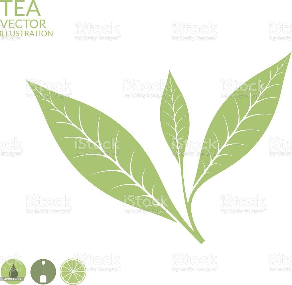 Tea leaf. Isolated on white background vector art illustration