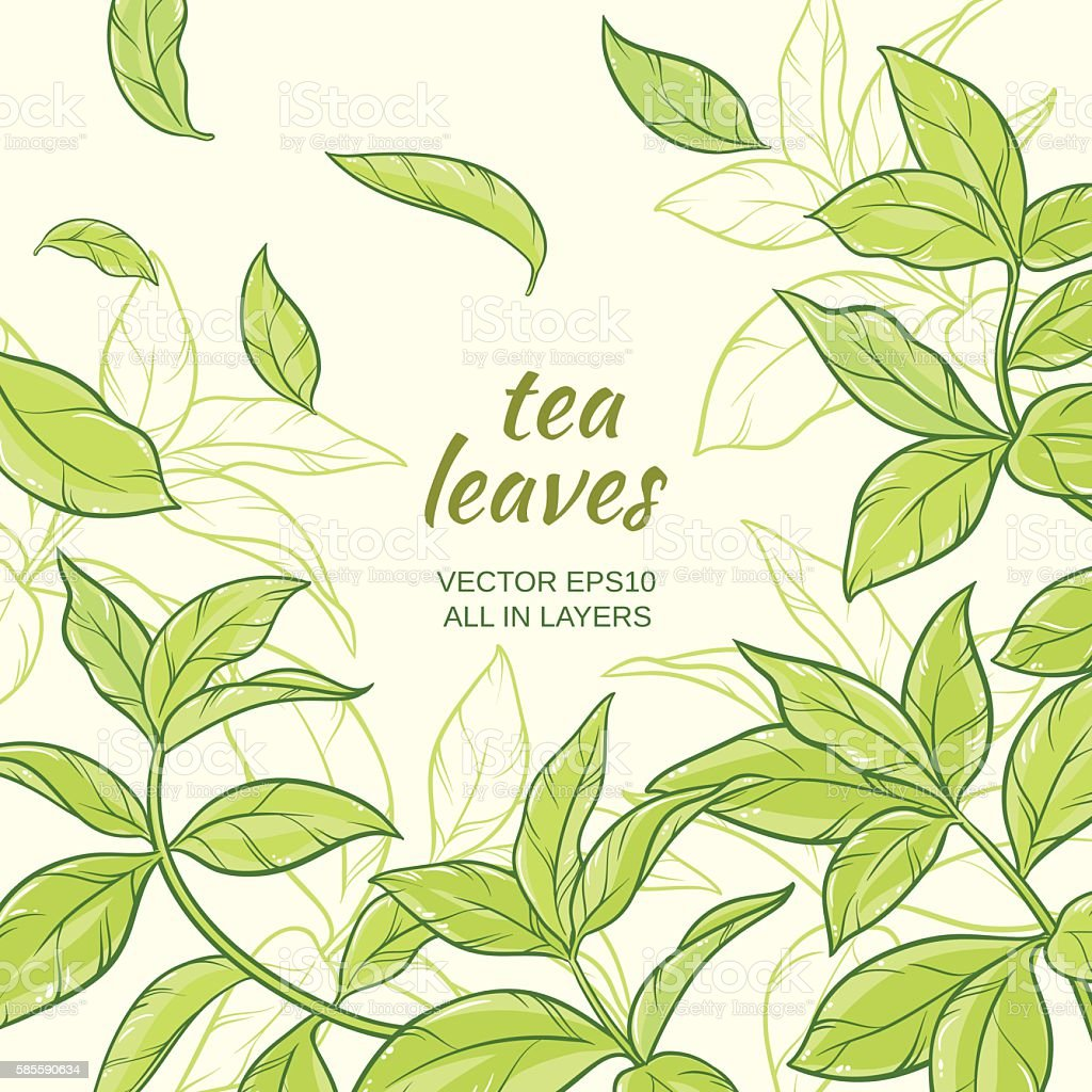 tea leaves background vector art illustration