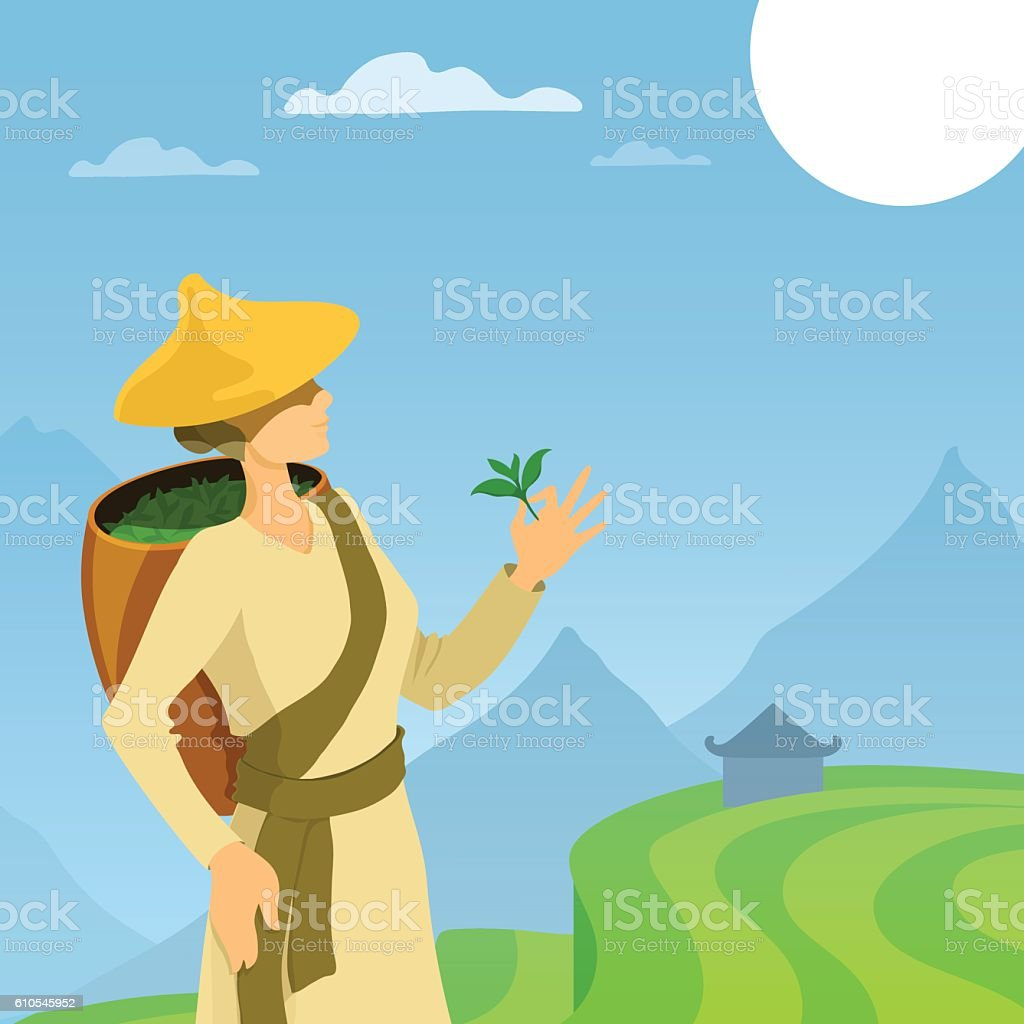 Tea picker woman cartoon illustration. vector art illustration