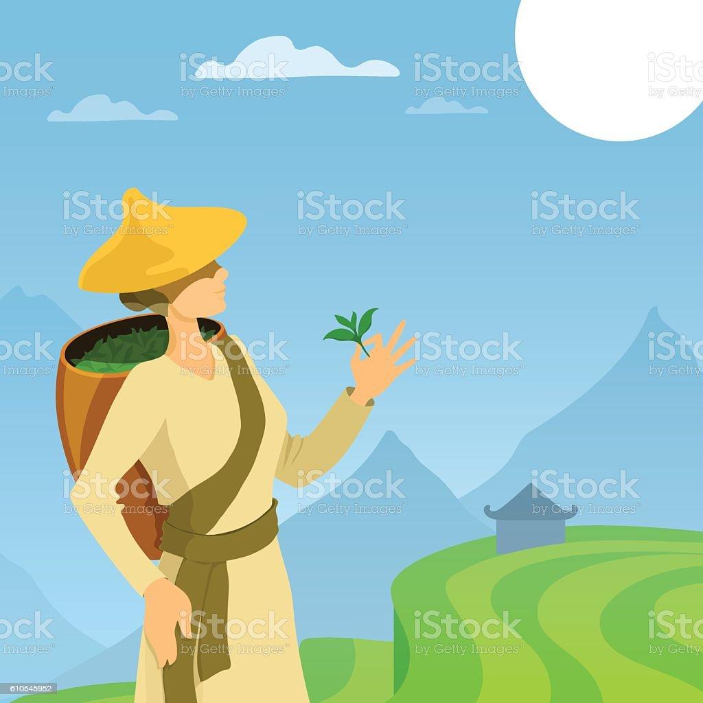 Tea picker woman cartoon illustration. vector art illustration