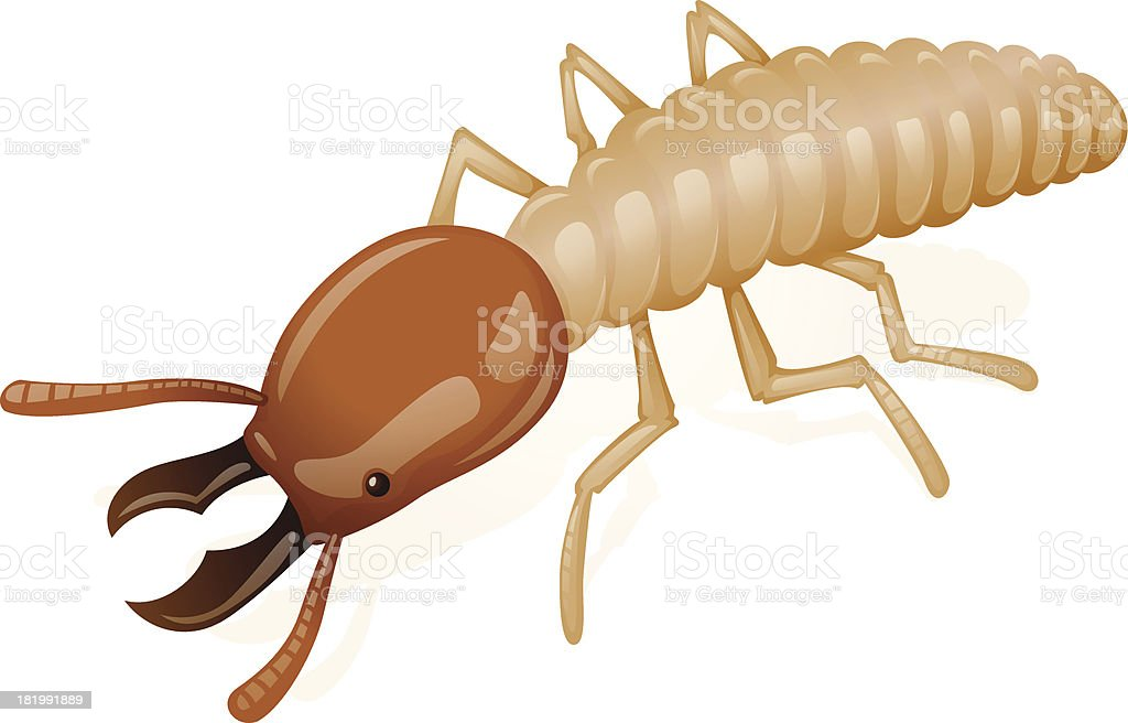 termite vector art illustration