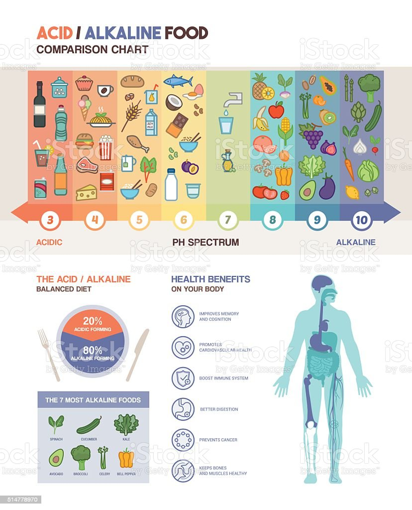 The acidic alkaline diet vector art illustration