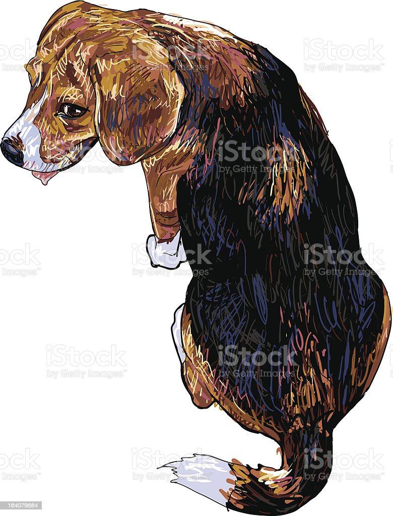 The back of beagle royalty-free stock vector art