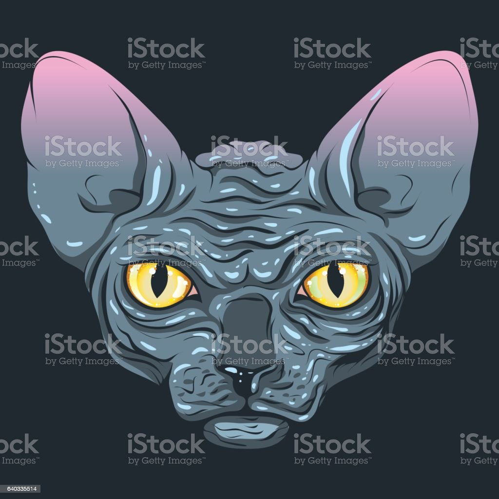 Color of cats fur - The Cat Without Fur Sphinx With A Dark Gray Color Royalty Free Stock Vector
