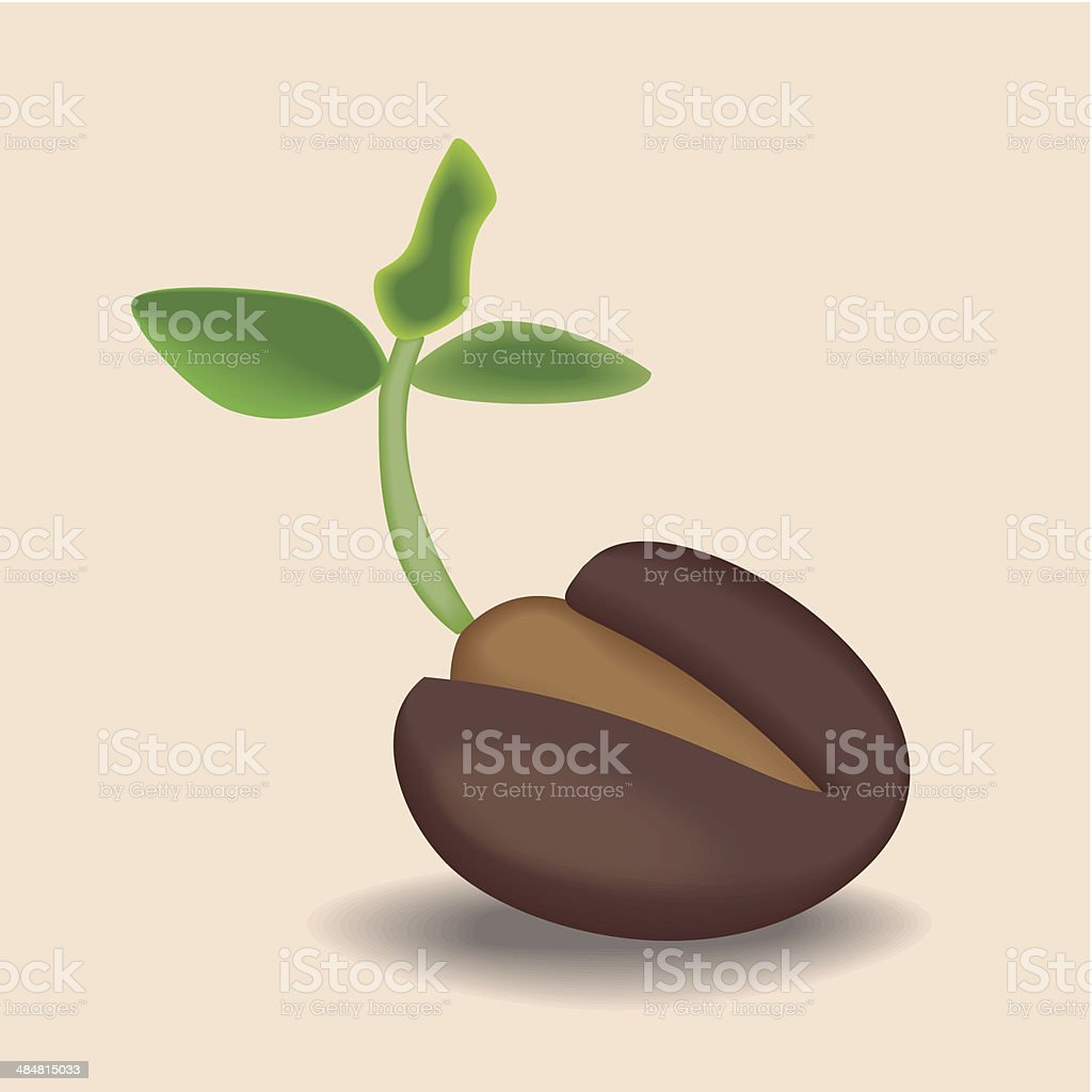 The cocoa beans royalty-free stock vector art