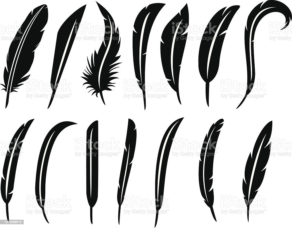 the collection of feathers vector art illustration