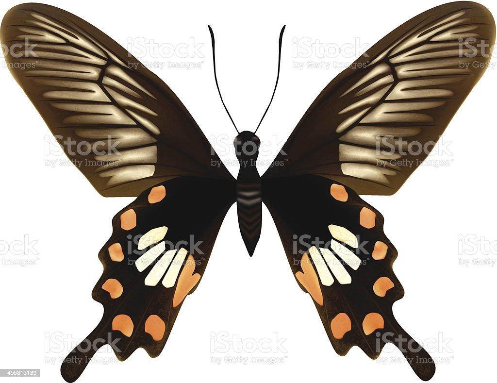 The Common Rose Butterfly-Vector Illustration vector art illustration