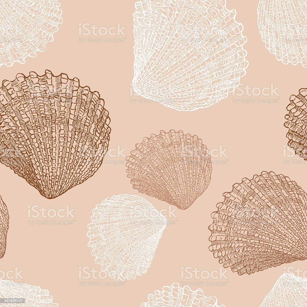 the drawn sea shells vector art illustration