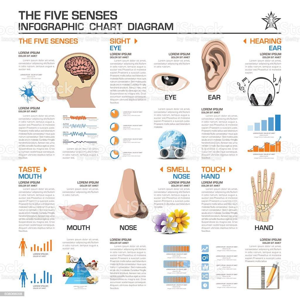 The Five Senses Infographic Chart Diagram vector art illustration