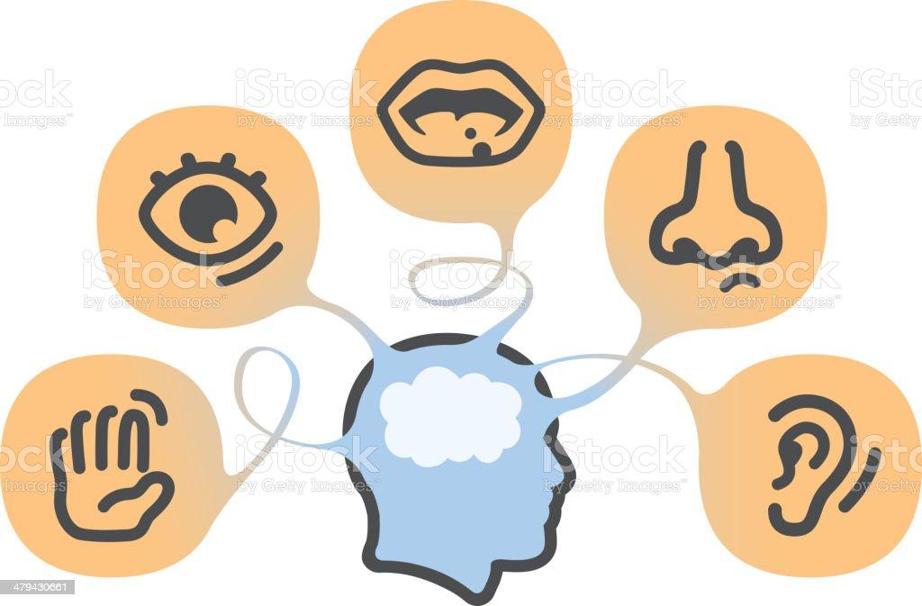 The five senses vector art illustration