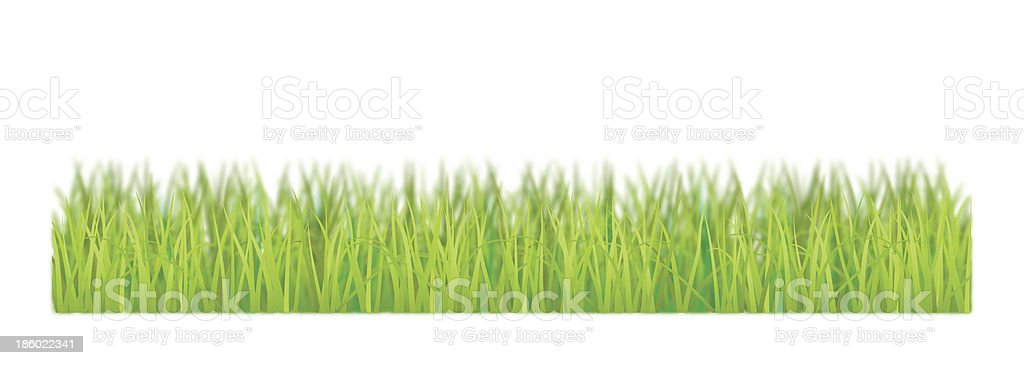 The grass is on a white background. vector art illustration