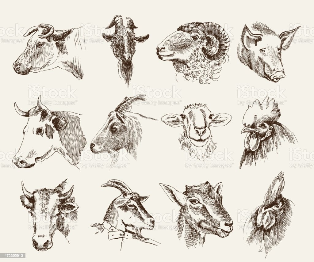 The heads of various farm animals royalty-free stock vector art