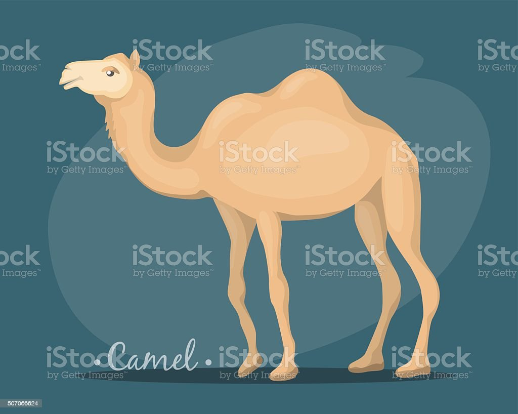 the image of a camel vector art illustration