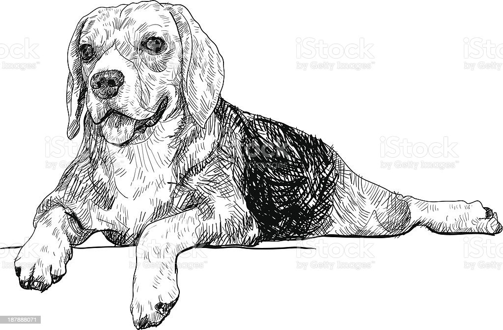 The rest time of beagle royalty-free stock vector art